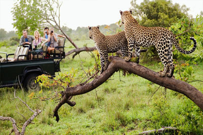 Zimbabwe safari tours