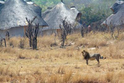 Hwange bush camp guide